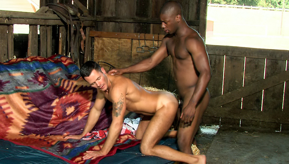 Watch Impulsive (Colt Studio Group) Gay Porn Tube Videos Gifs And Free XXX HD Sex Movies Photos Online